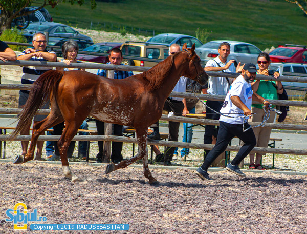 Festivalul Calului Zorabia Sibiu 2019