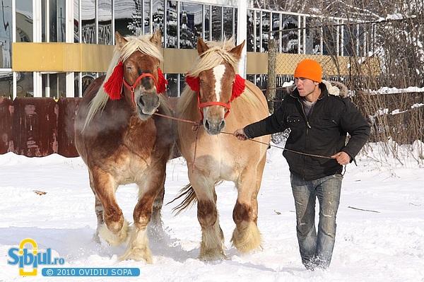 Expozitie de cai pe stadionul Vointa - Sibiu 2010