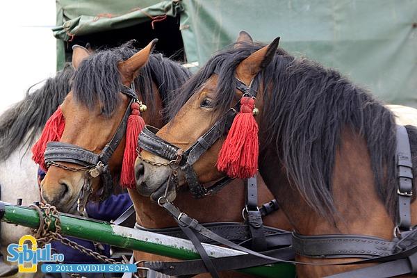 Expozitie de cai Sibiu 2011 ( ovisopa )
