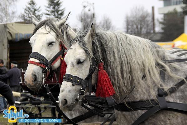 Expozitie de cai Sibiu 2011