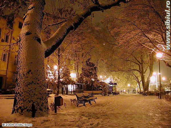 Parculastra iarna