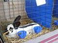 expozitie ,iepuri