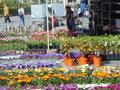 piata mare,festivalul gradinilor