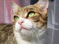 pisica de sibiu :)