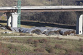 Autostrada A1 Orastie - Sibiu, Viaduct Aciliu, noiembrie