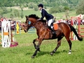 Transylvania International Horse Show 2012