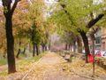 Aleea din Parcul Cetatii