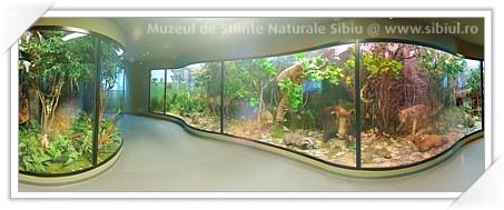 Sibiu: Muzeul de Istorie Naturala