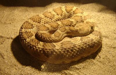 Expozitie de reptile la Muzeul Brukenthal Sibiu 2009